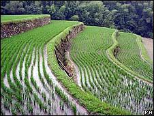 Sistema de irrigación en un campo de arroz.