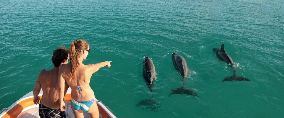tiamo dolphins