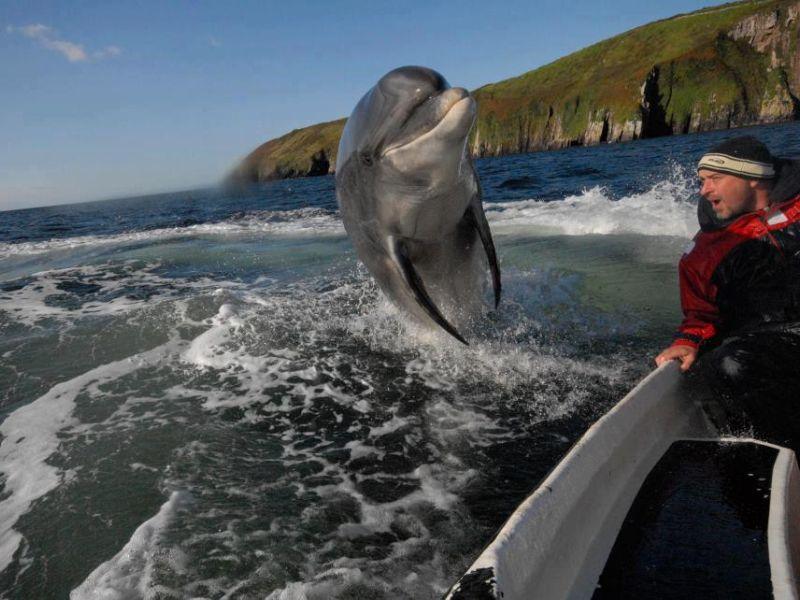 Fungie dolfijnen boottrip vanuit Dingle