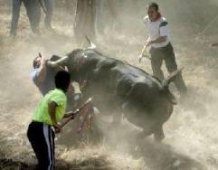 Entertainment or barbarism ????