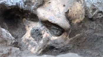 New Found Fossil Skull Challenges Evolution Findings
