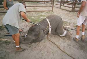 No Circus and poorly managed zoos.