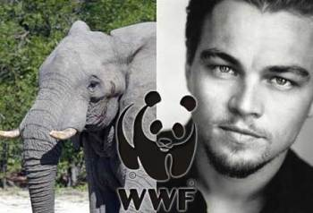 One person has the power to save thousands of elephants: Support Leonardo DiCaprio