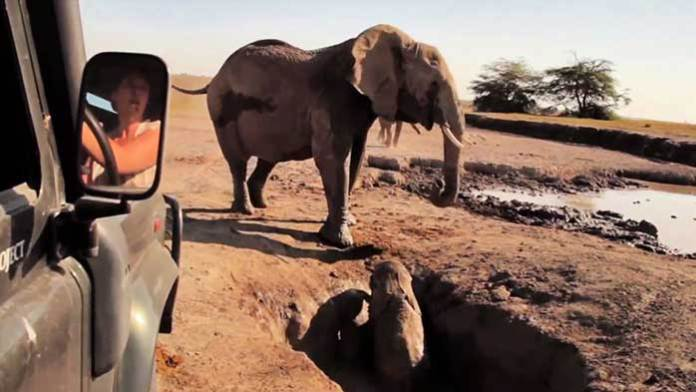 THIS REUNION BETWEEN MAMA  & BABY ELEPHANTS WILL WARM YOUR HEART!