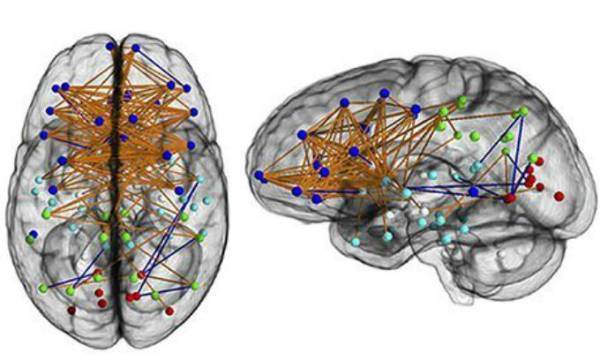 Neural map of a typical woman's brain. Photograph: National Academy of Sciences/PA