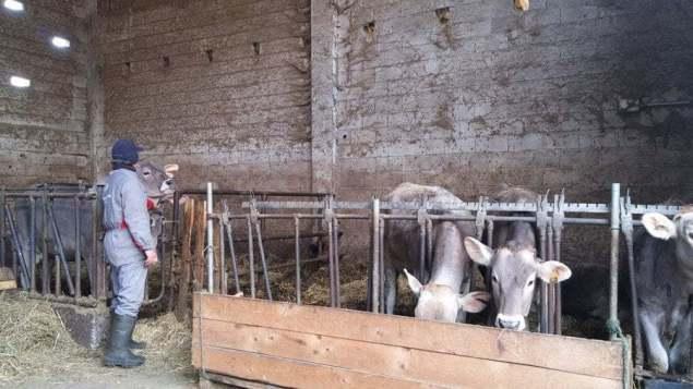 Bonomi Ennio in stalla con le vincitrici del miglior latte dell'anno