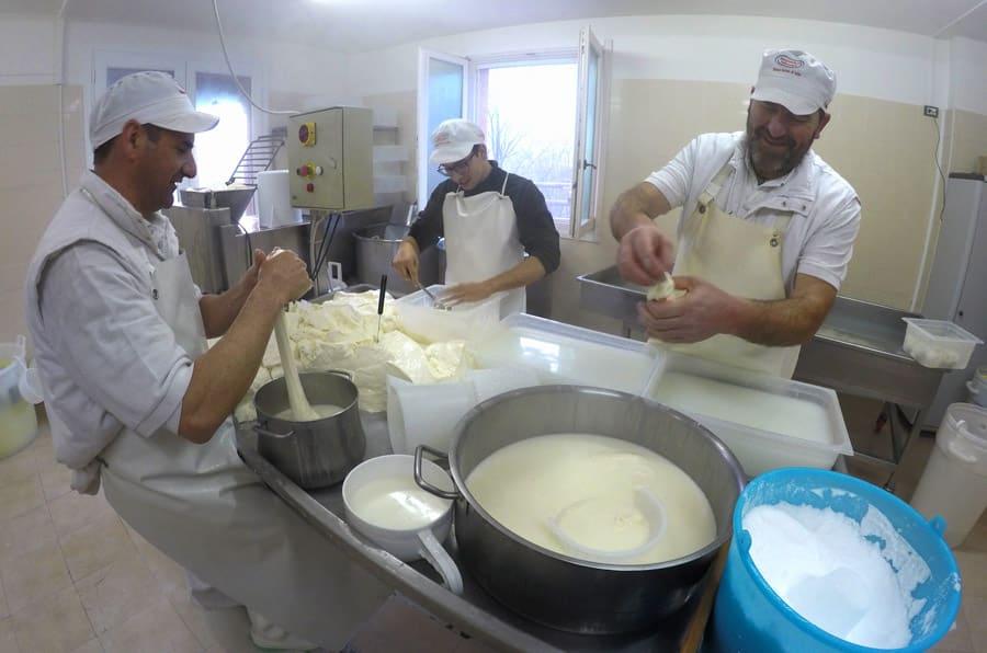Lavorazione del caglio per la produzione a mano di mozzarella, nodini e stracciatella