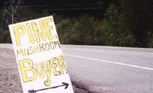 Sign for pine mushroom buyer along BC highway