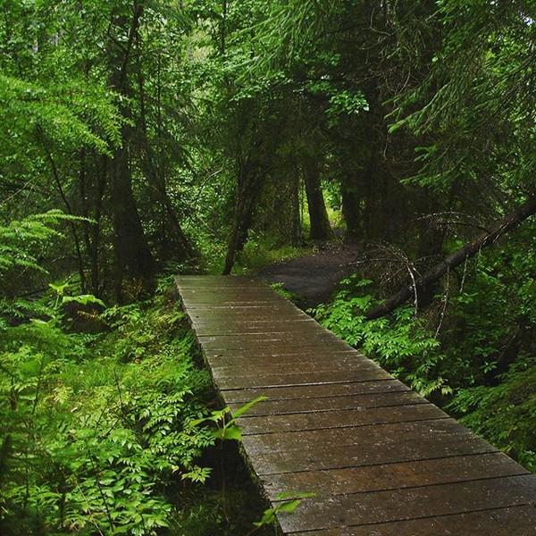 Chilkoot Trail, el camino de oro