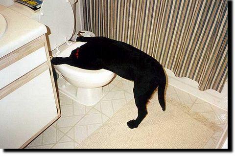 01-dog_hangover1