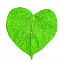 Coeur vert B comme Nature
