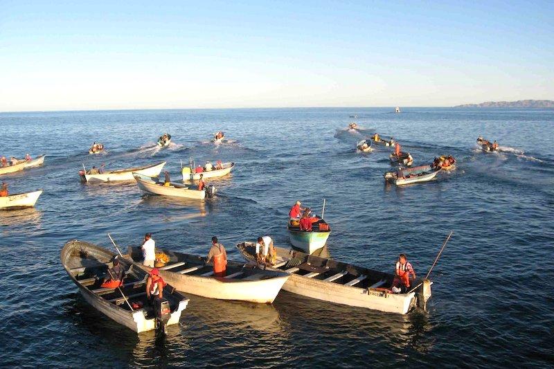 pescadores pesca lanchas santa rosalia