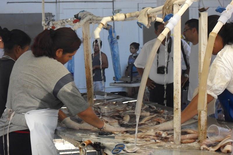 Resultado de imagen para Pesca del calamar Santa Rosalia