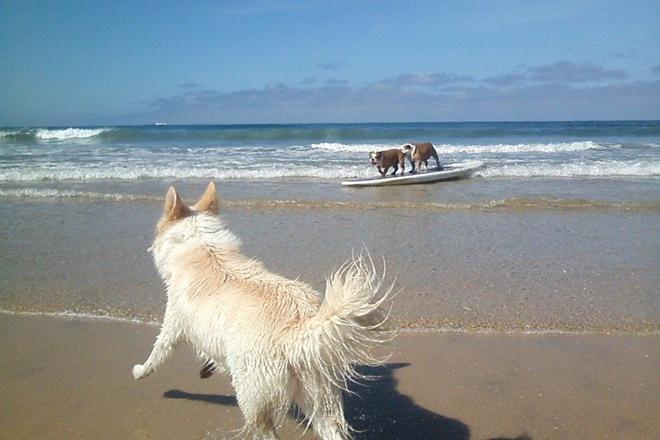 surf perros 3