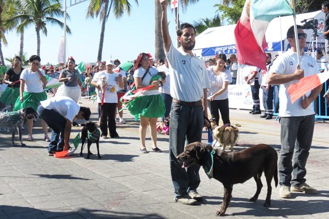 perros desfile