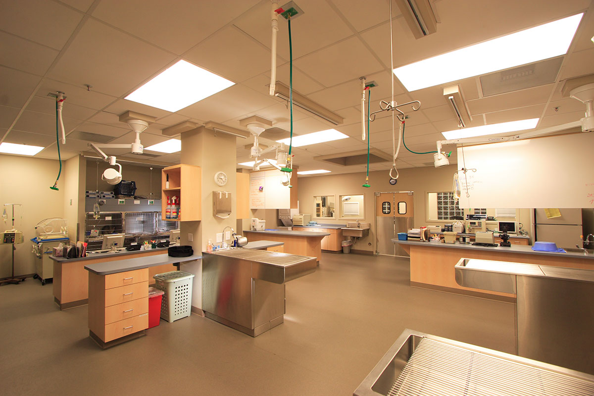 BDA Architecture  Veterinary Hospitals  General Practice