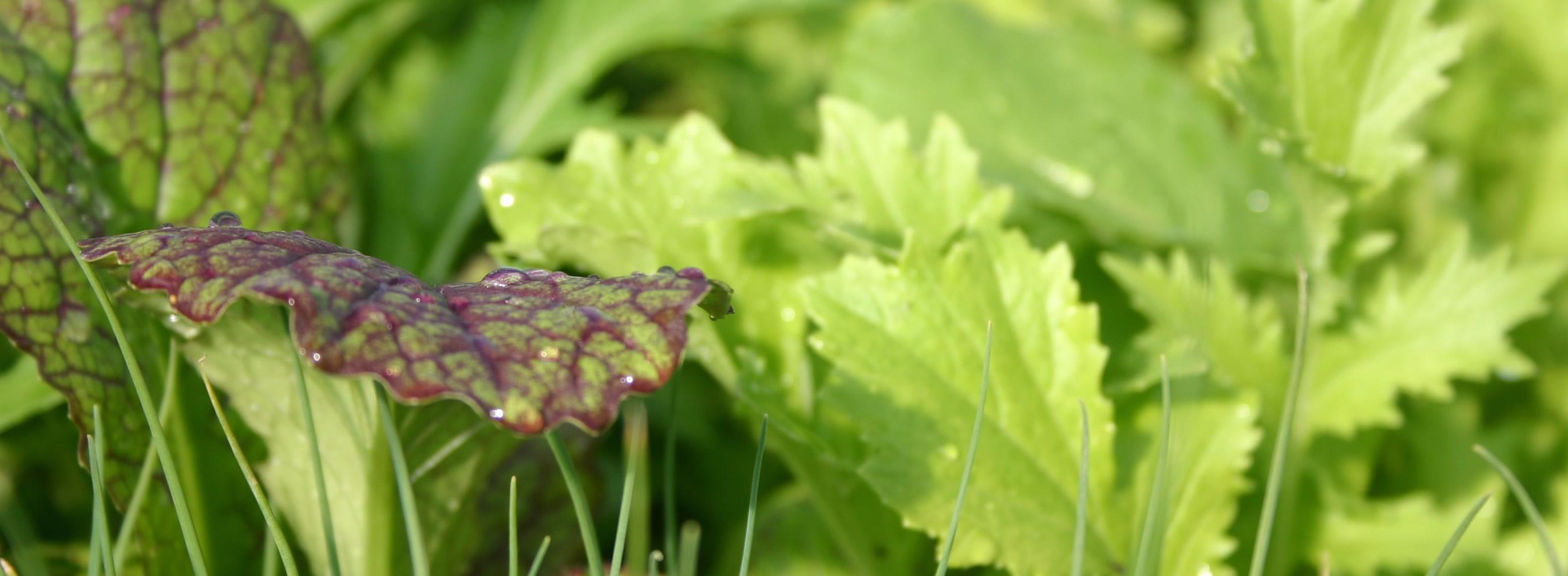 leaves fp