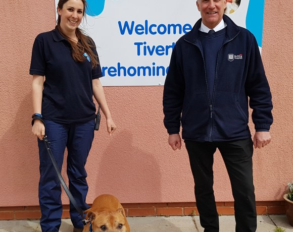The Tiverton branch of animal rehoming charity Blue Cross has been voted as a winner of RGB Building Supplies' Well Built Community Fund and now has £1,000 to spend on building materials.