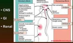 codeine sulfate