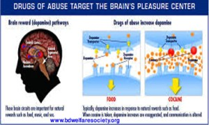 Brain Hijacks - Addiction Is Responsible And Work As A Hijacker, Collected Unique Picture No-0005.