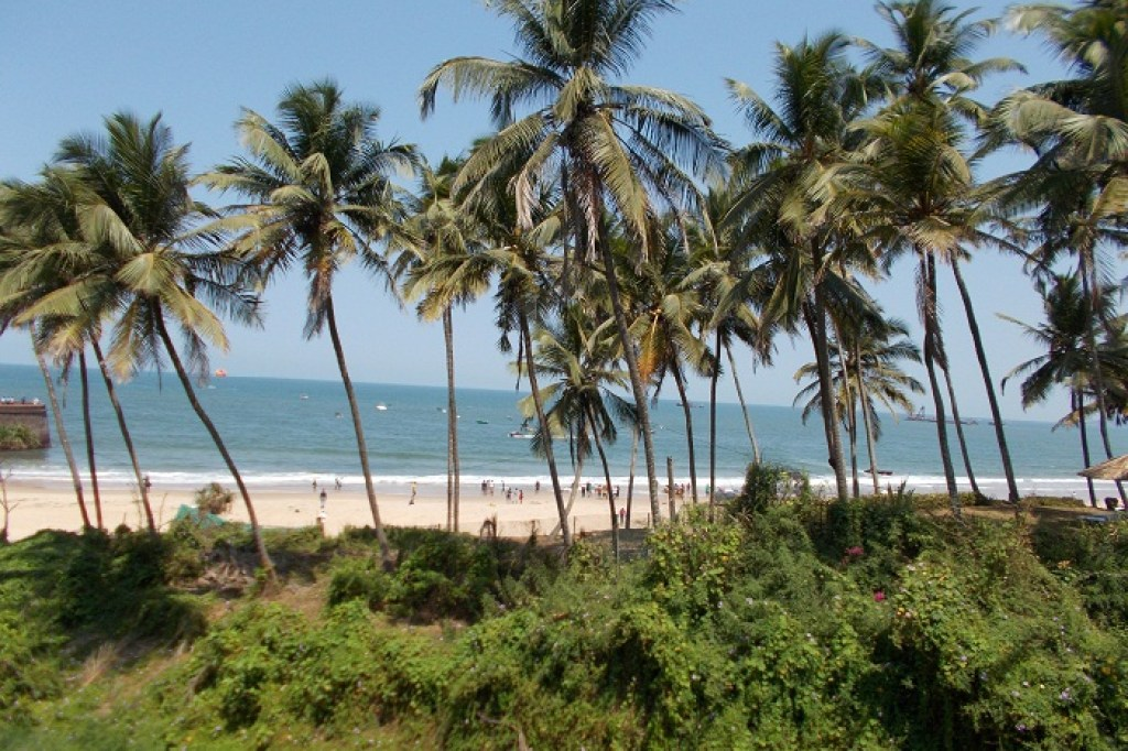 Goa Beach_Coconut trees_Beach Haven_BeachBumDiaries