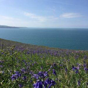 Bluebells on the coast patj