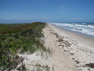 Image result for playalinda beach florida