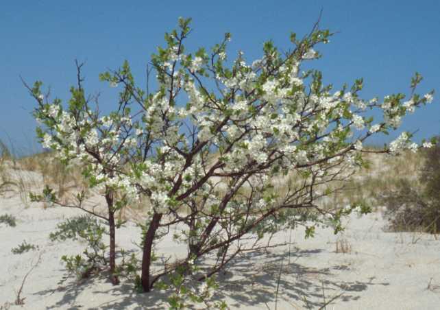 Photos  Beach Plum Small farm sustainability through crop diversification and valueadded