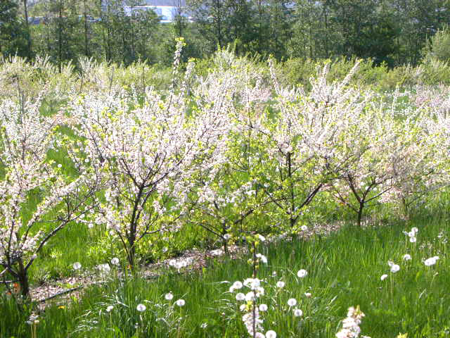 Updates  Beach Plum Small farm sustainability through crop diversification and valueadded
