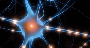Neural Pathway Small