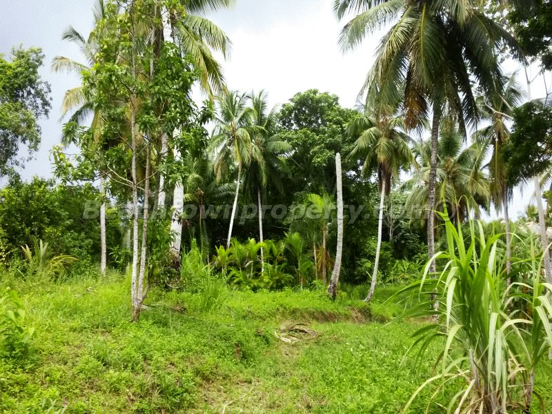 Las Terrenas Samana Ocean View lots for Sale