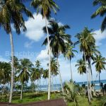 Coson Beachfront Land Las Terrenas Samana