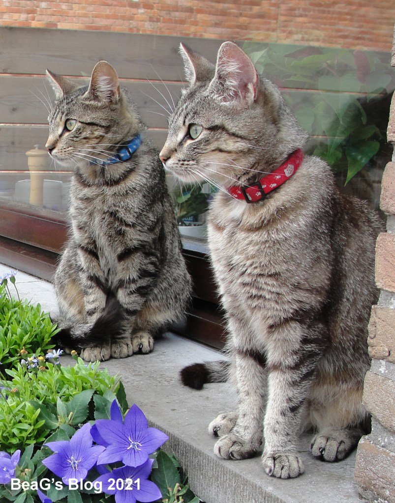 Two grey striped cats on a windowsill.