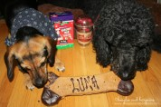 Luna reluctantly shares part of her yummy Dino Bone from Three Dog Bakery.