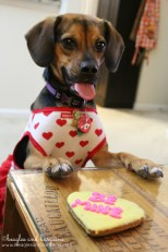 """Luna asks her cookie """"Will you be mine?"""""""