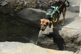 Luna jumps to cross the rock bridge