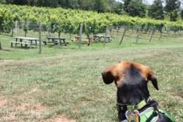 Luna visits Lake Anna Winery