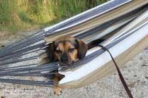 Luna in a hammock