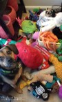 Toy hoarder