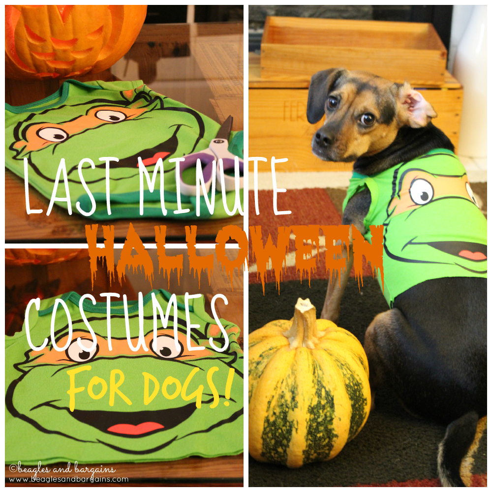 Last Minute DIY Dog Halloween Costumes from Baby Onesies