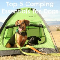 Top 5 Camping Essentials for Dogs {Stocking Stuffer Giveaway - Day #1}
