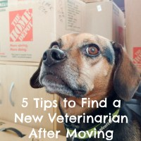 Moving? Use These Tips to Find Your Pet a New Veterinarian