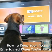 7 Ways to Keep Your Dog Entertained When You're Away {Stocking Stuffer Giveaway – Day #7}