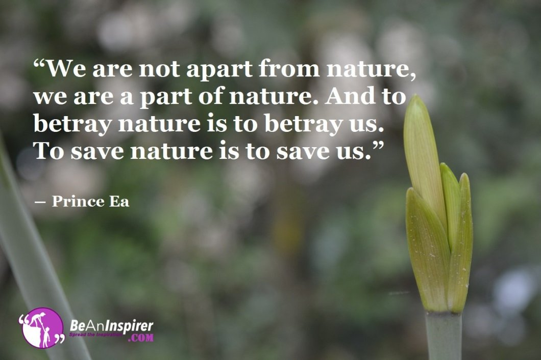 How To Save and Protect Nature To Reduce Environmental Pollution?