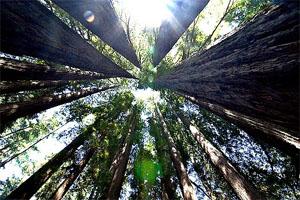 evergreen content trees