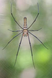 HM Ng, spider on web