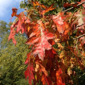 autumnal scene, red leaves, hydrophilic