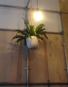 Plant, light, scaffolding at McIntyre's Angel