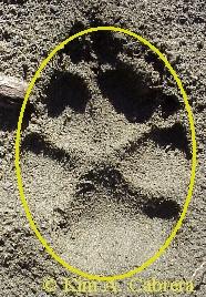 dog track shape