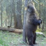 Bear Conflict Solutions